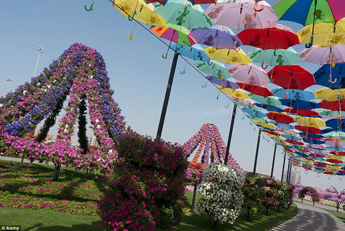 گذرگاهی به شکل چتر در باغ Miracle Garden، که مسیری رنگارنگ را برای پیاده روی میهمانان بازدید کننده فراهم می آورد.