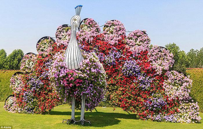 آرایه ای به شکل طاووس از گل های رنگارنگ در بزرگترین باغ گل طبیعی دنیا