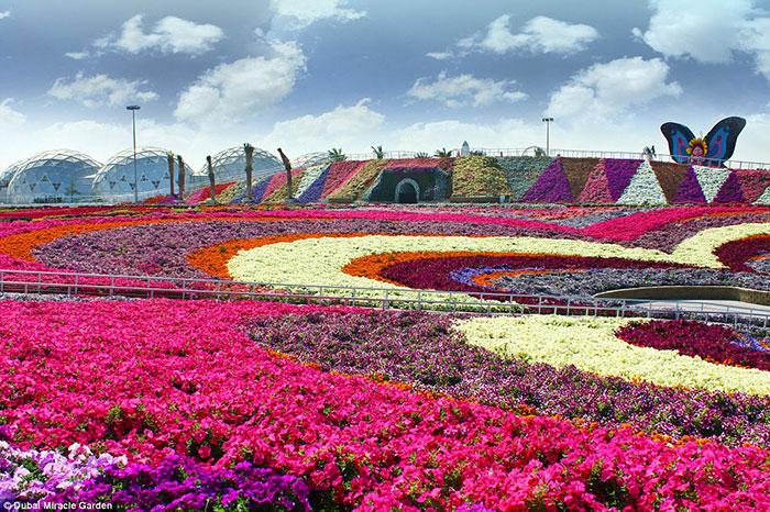 شما در یک آن می توانید نظاره گر 45 گونه گیاهی گل از سراسر دنیا باشید که همگی یک جا جمع شده اند.