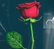 نخستین گل رز طبیعی دیجیتالی