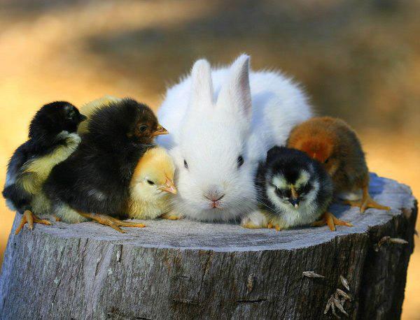 عکس های زیبا و بامزه از خرگوش های ناز و کوچولو (10)