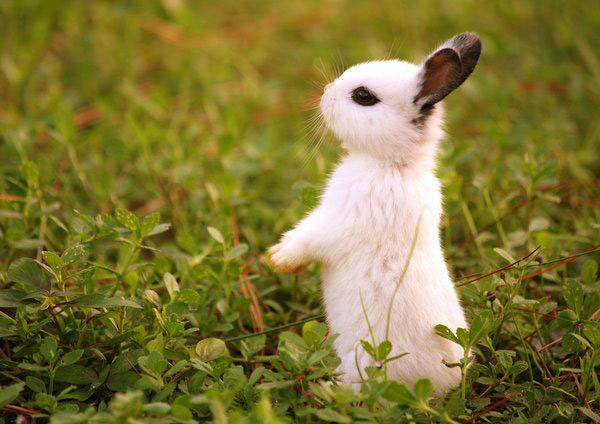عکس های زیبا و بامزه از خرگوش های ناز و کوچولو (11)