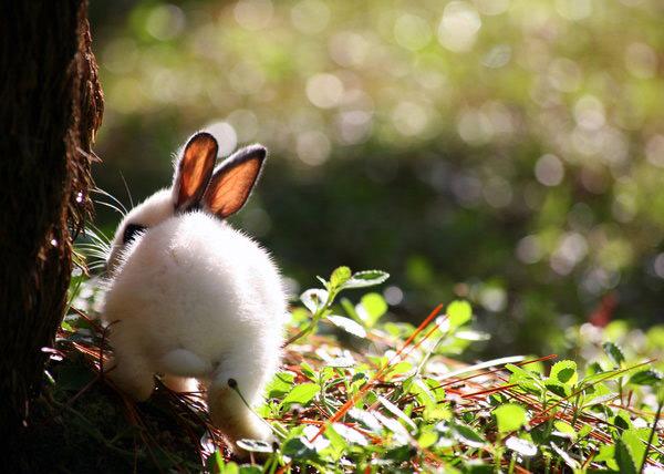 عکس های زیبا و بامزه از خرگوش های ناز و کوچولو (12)