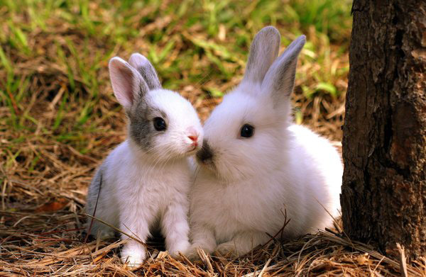 عکس های زیبا و بامزه از خرگوش های ناز و کوچولو (13)