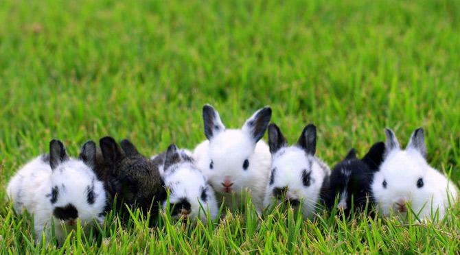 عکس های زیبا و بامزه از خرگوش های ناز و کوچولو (15)