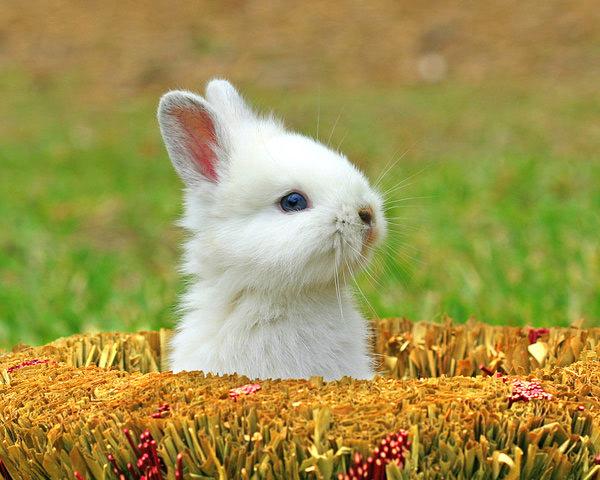 عکس های زیبا و بامزه از خرگوش های ناز و کوچولو (16)