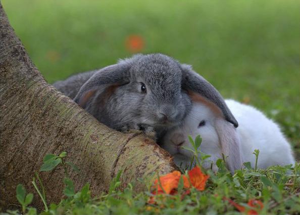 عکس های زیبا و بامزه از خرگوش های ناز و کوچولو (17)