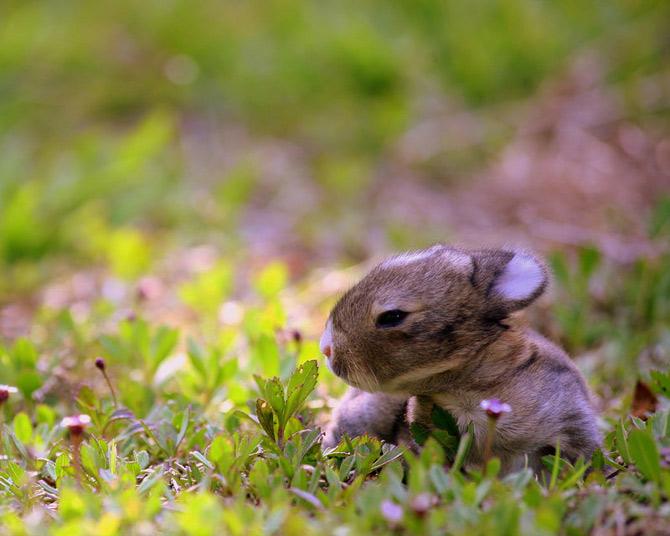 عکس های زیبا و بامزه از خرگوش های ناز و کوچولو (18)