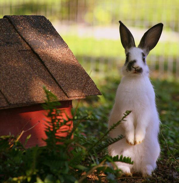 عکس های زیبا و بامزه از خرگوش های ناز و کوچولو (19)