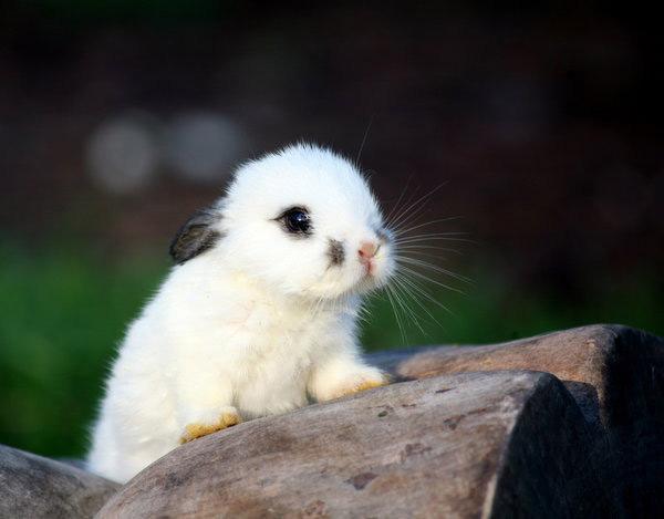 عکس های زیبا و بامزه از خرگوش های ناز و کوچولو (2)