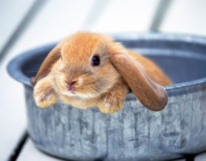 عکس های زیبا و بامزه از خرگوش های ناز و کوچولو (20)