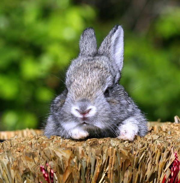 عکس های زیبا و بامزه از خرگوش های ناز و کوچولو (21)