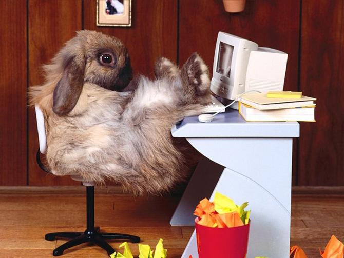 عکس های زیبا و بامزه از خرگوش های ناز و کوچولو (22)
