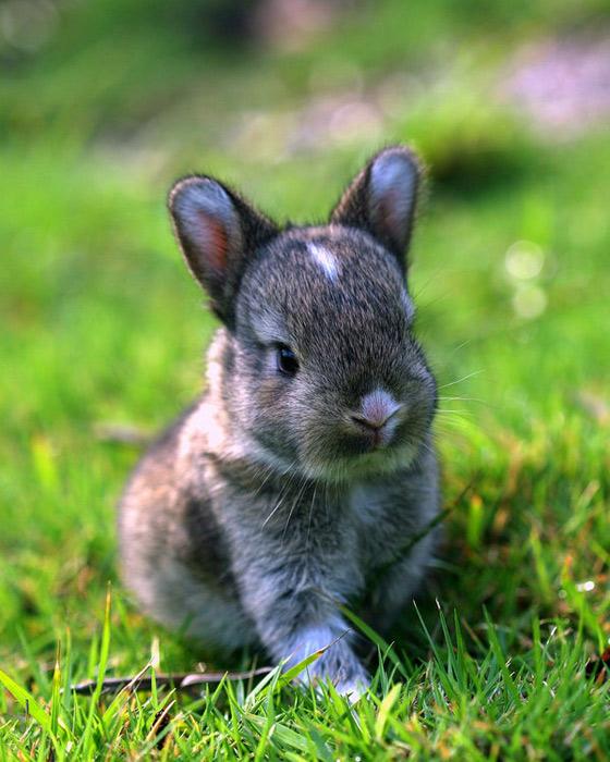 عکس های زیبا و بامزه از خرگوش های ناز و کوچولو (23)