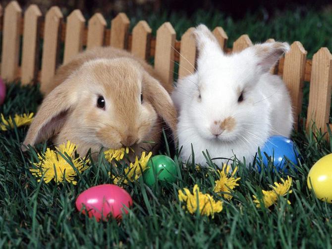 عکس های زیبا و بامزه از خرگوش های ناز و کوچولو (24)