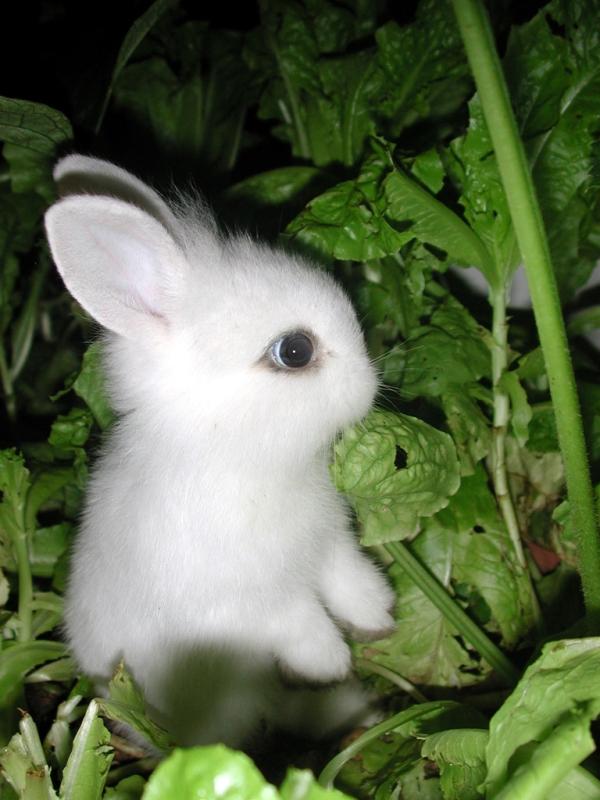 عکس بچه خرگوش ناز و کوچولو