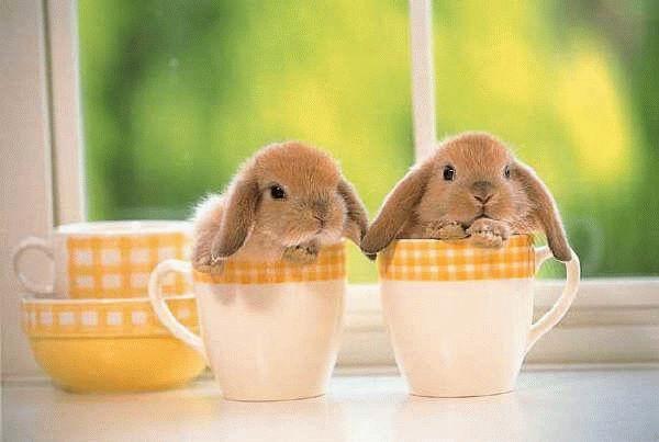 عکس های زیبا و بامزه از خرگوش های ناز و کوچولو (3)