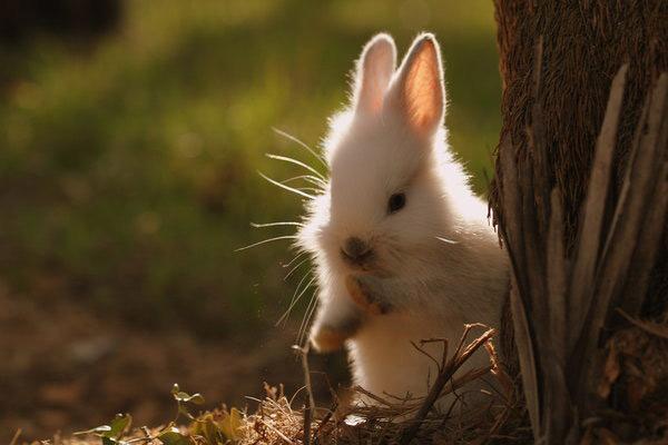 عکس های زیبا و بامزه از خرگوش های ناز و کوچولو (4)