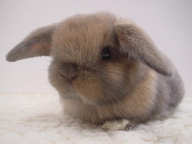 عکس های زیبا و بامزه از خرگوش های ناز و کوچولو (6)