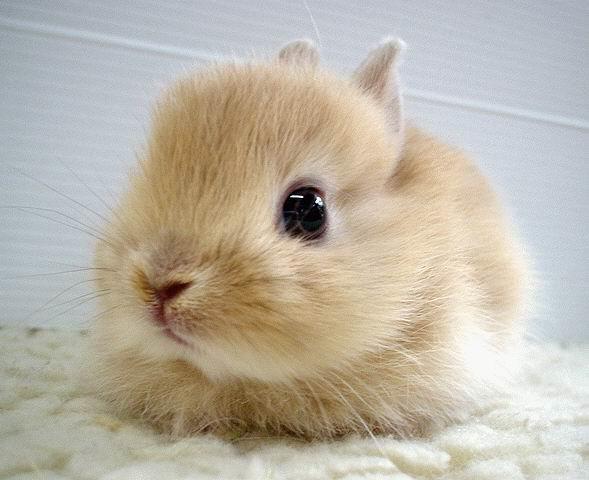 عکس های زیبا و بامزه از خرگوش های ناز و کوچولو (8)