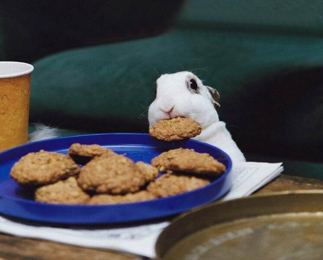 عکس های زیبا و بامزه از خرگوش های ناز و کوچولو (9)