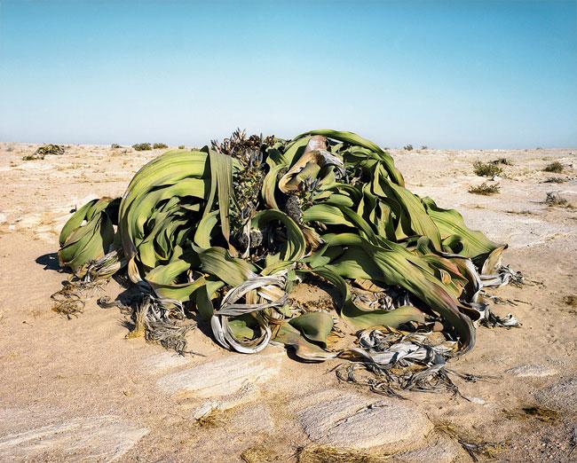 زشت ترین گیاه دنیا