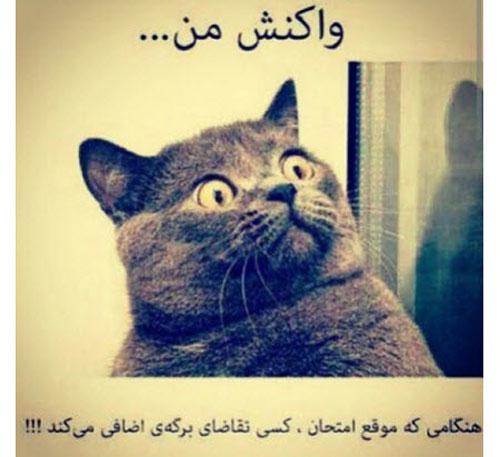 عکس نوشته خنده دار پروفایلی برای شب های امتحان و درس خواندن