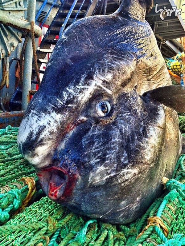 ترسناک ترین هیولاهای دریایی