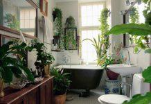 بهترین گیاهان مخصوص سرویس بهداشتی