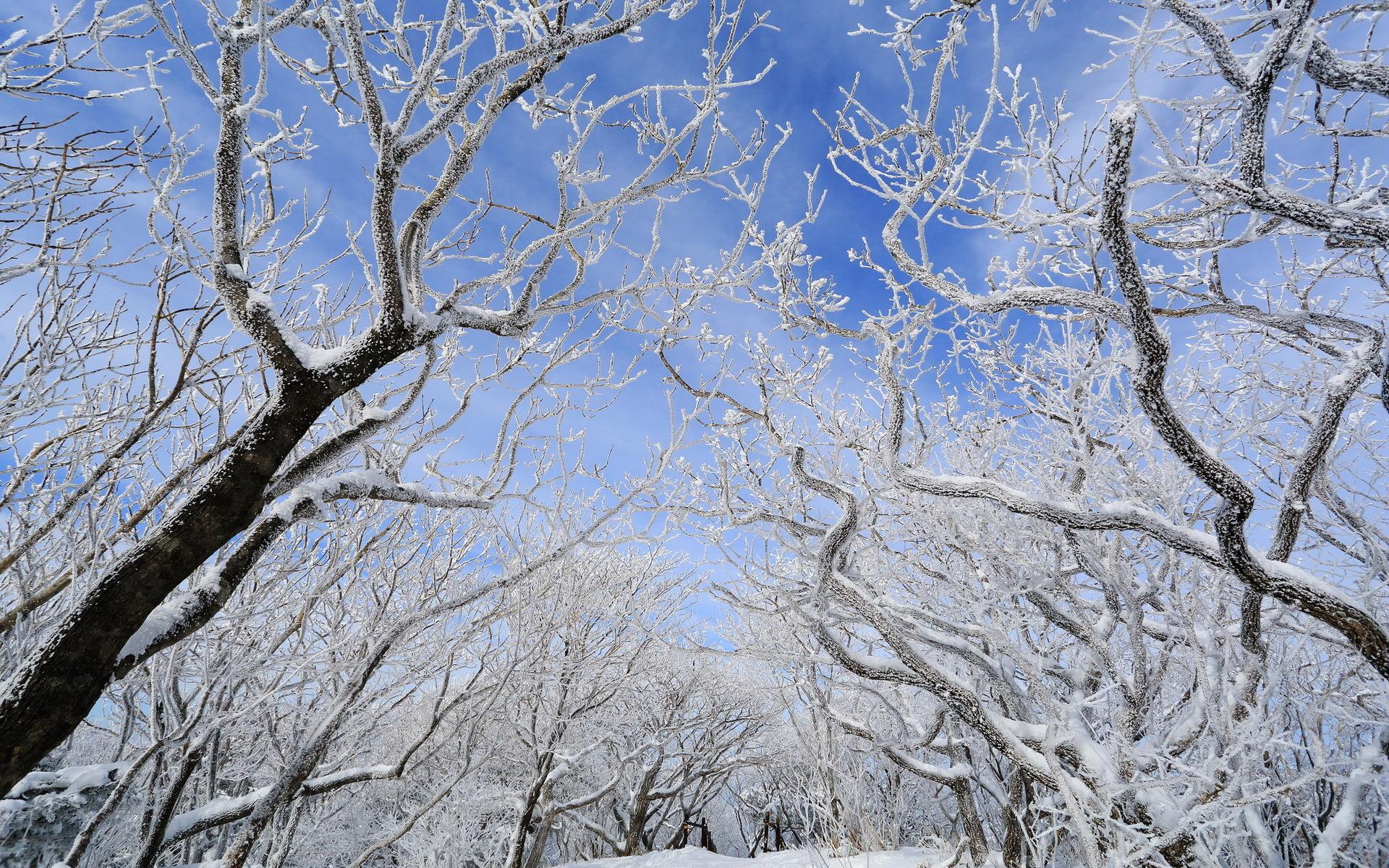 دانلود عکس زمستان برفی برای پروفایل با کیفیت HD