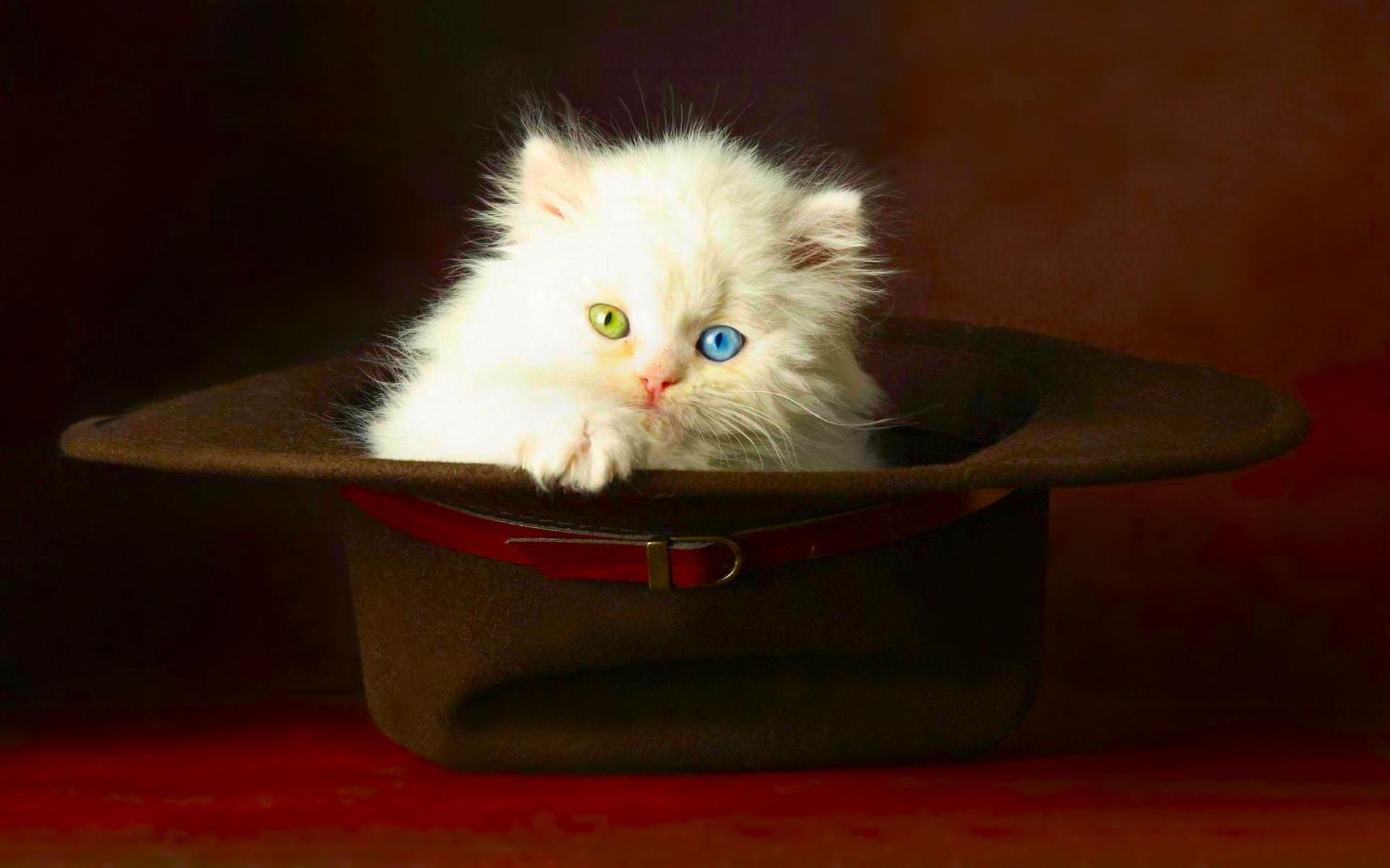 عکس گربه های ملوس و زیبا برای پروفایل و تصویر زمینه
