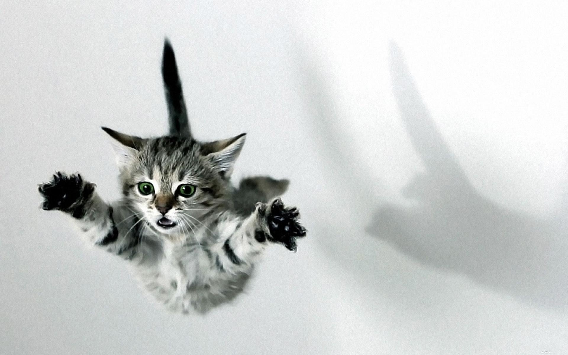 عکس گربه های ناز و کوچولو برای پروفایل و تصویر زمینه