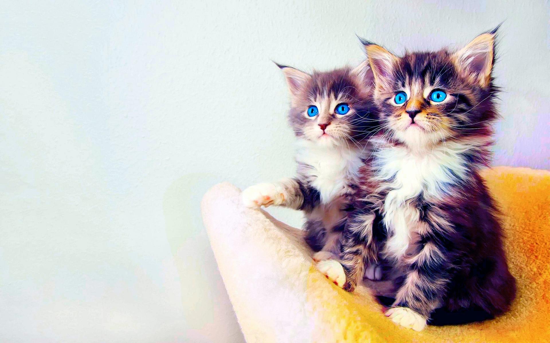 عکس گربه های ناز و کوچولو برای پروفایل و تصویر زمینهعکس گربه های ناز و کوچولو برای پروفایل و تصویر زمینه