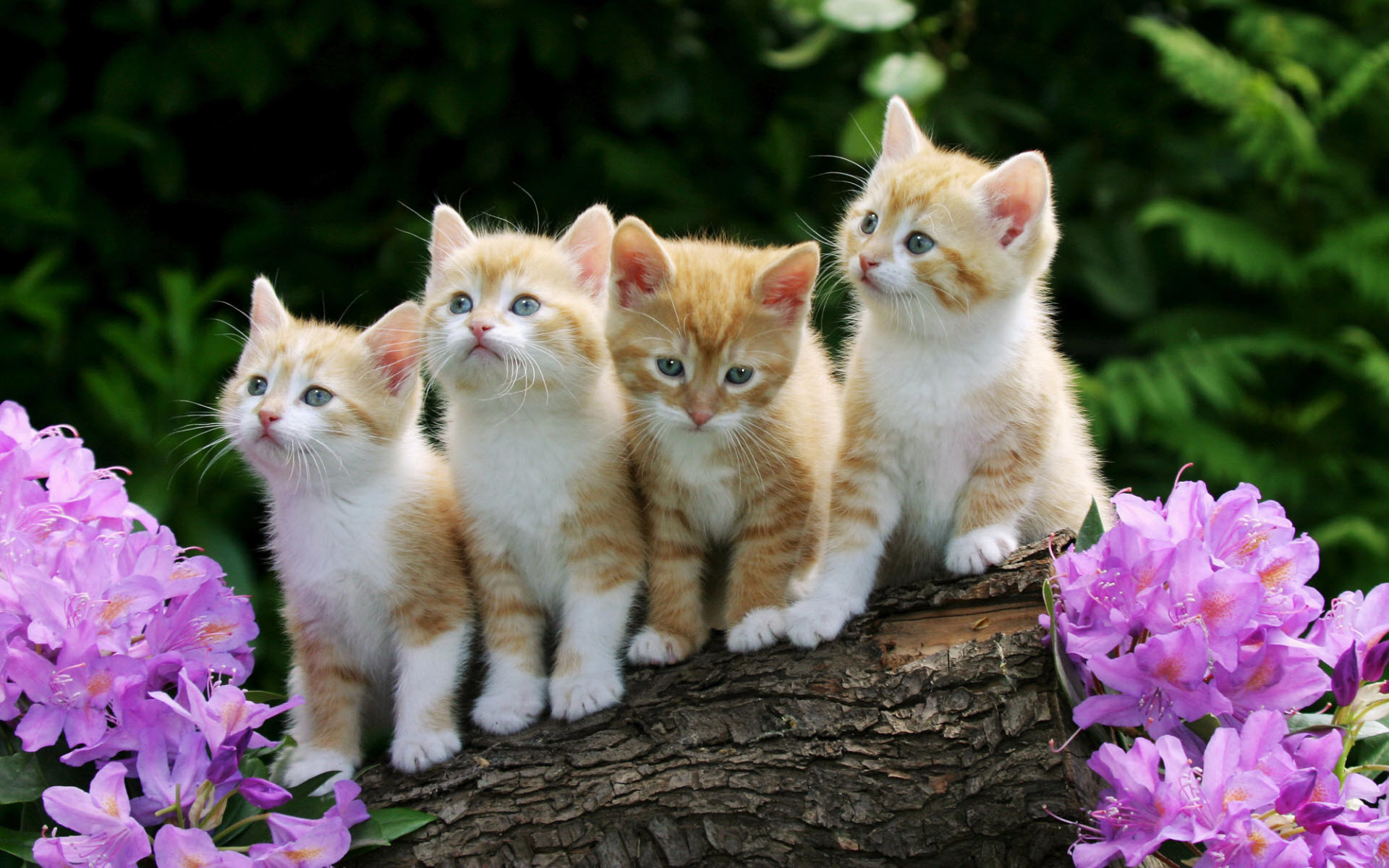 والپیپر گربه های ناز و ملوس