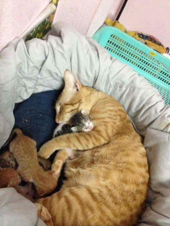عکس گربه , عکس بچه گربه