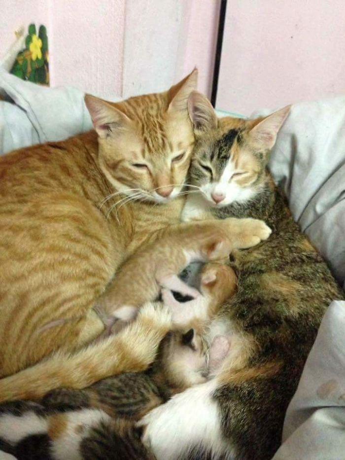 عکس گربه , عکس عاشقانه حیوانات