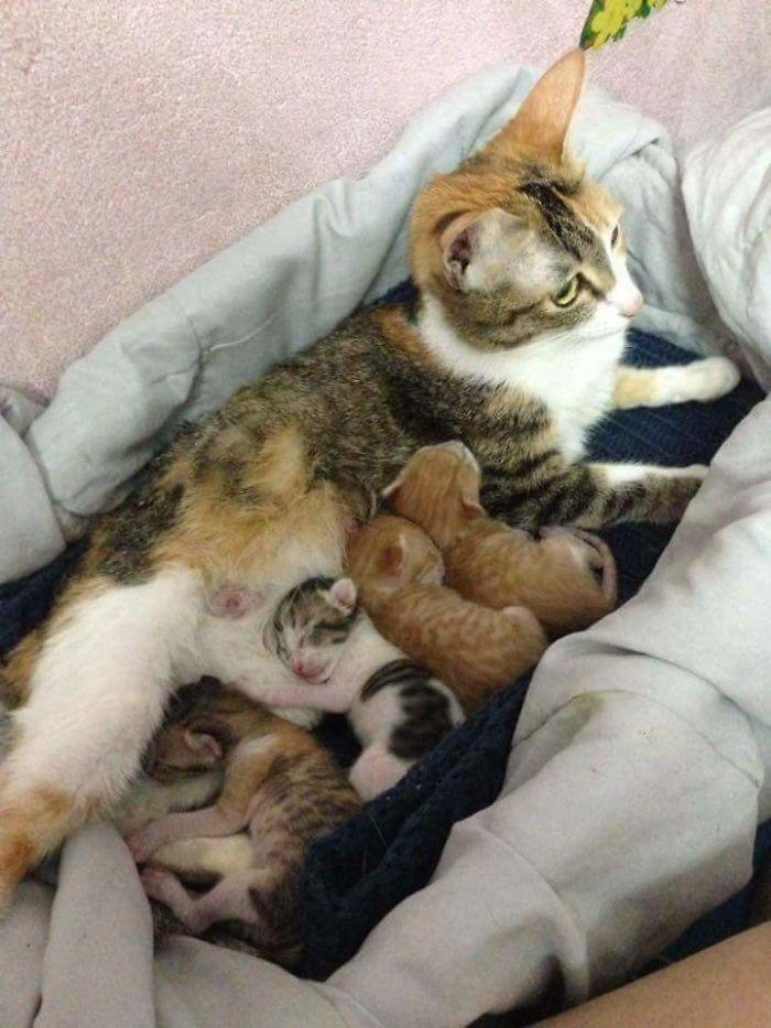 عکس گربه , عکس بچه گربه ی تازه متولد شده