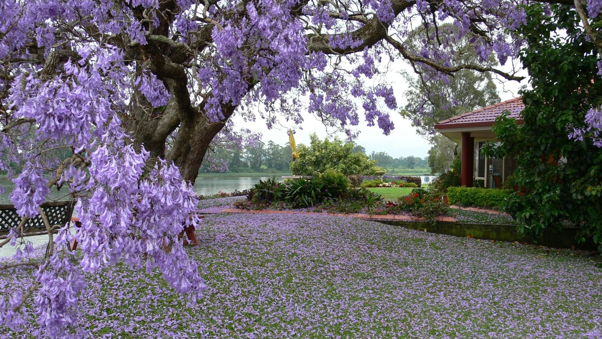 عکس طبیعت بهاری با کیفیت بالا
