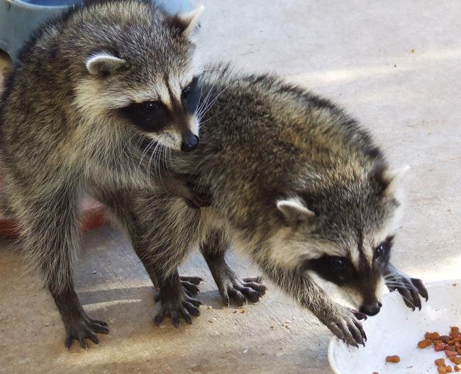 عکس حیوانات برای پروفایل