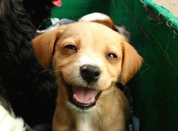 عکس سگ برای پروفایل