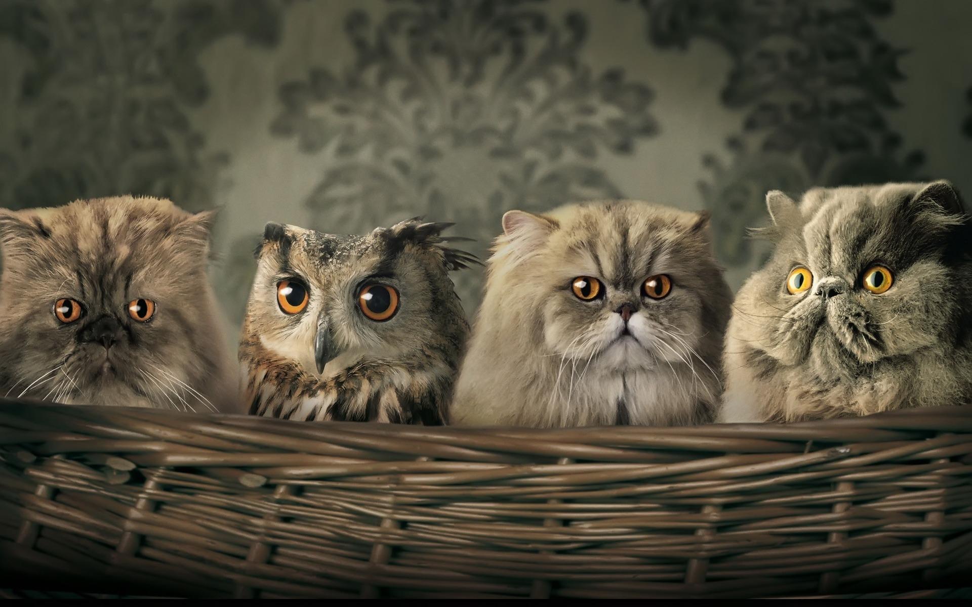 عکس گربه های بامزه برای پروفایل و تصویر پس زمینه
