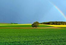 عکس طبیعت زیبا با کیفیت بالا برای دسکتاپ