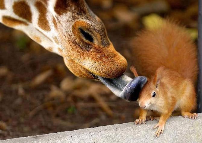 عکس های خنده دار و بامزه حیوانات برای پروفایل
