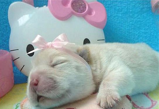 عکس پروفایل توله سگ های بامزه
