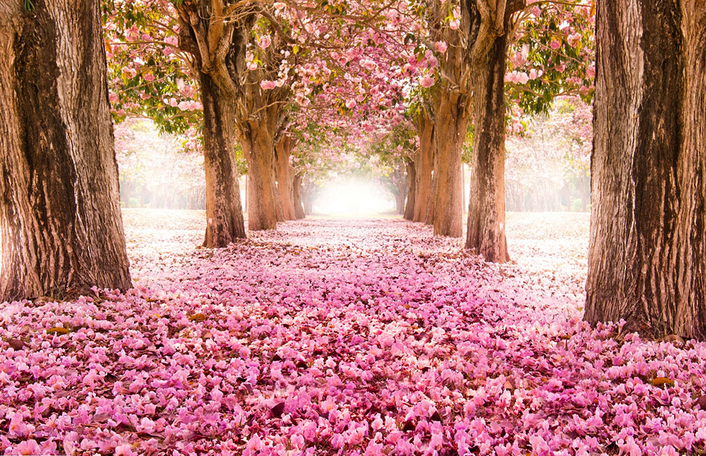 عکس طبیعت بهاری برای پروفایل