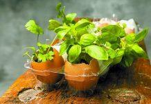 آموزش کاشت سبزه در پوسته تخم مرغ