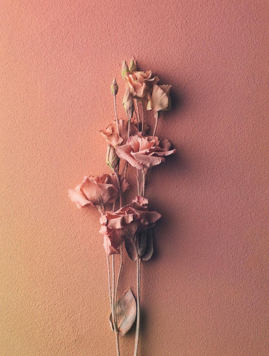 عکس های زیبا از گل های غوطه ور در پودر رنگ