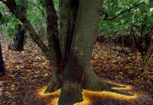 پای درخشان درختان با برگ های افتاده