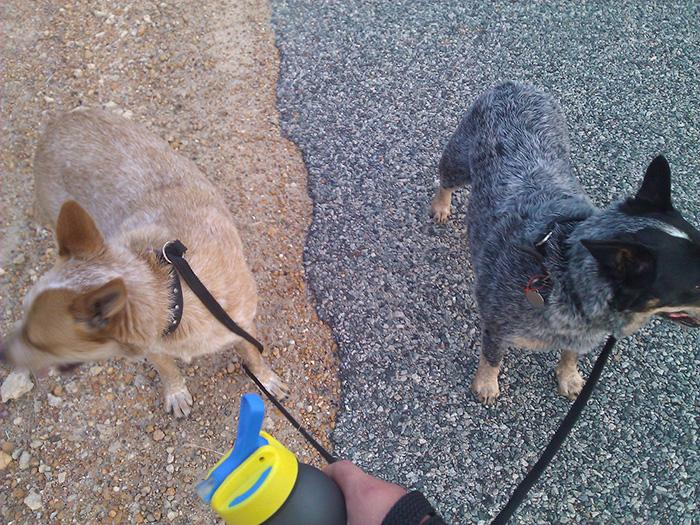 سگ هایی که در جای مناسبی ایستاده اند