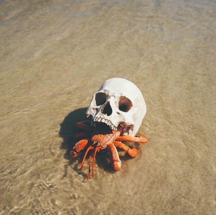خرچنگی که با جمجمه برای خود پوسته ساخته است